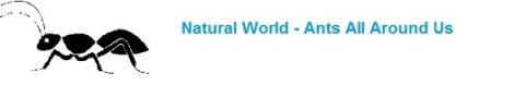 Natural World: Ants
